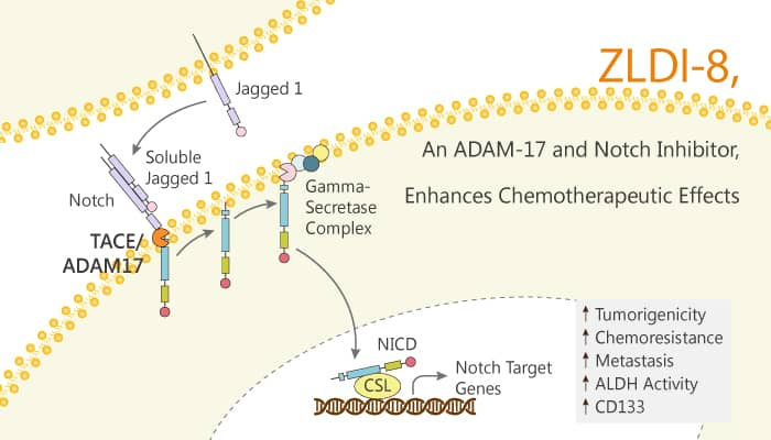 ZLDI 8 an ADAM 17 and Notch Inhibitor Enhances Chemotherapeutic Effects 2020 03 12 - ZLDI-8, an ADAM-17 and Notch Inhibitor, Enhances Chemotherapeutic Effects