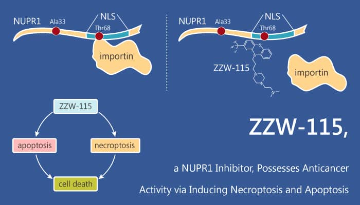 ZZW 115 a NUPR1 Inhibitor Possesses Anticancer Activity via Inducing Necroptosis and Apoptosis 2020 08 29 - ZZW-115, a NUPR1 Inhibitor, Possesses Anticancer Activity via Inducing Necroptosis and Apoptosis