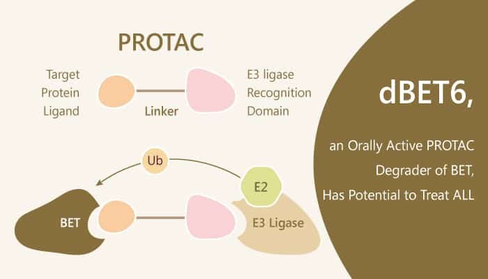 dBET6 an Orally Active PROTAC Degrader of BET Has Potential to Treat ALL 2019 07 22 - dBET6, an Orally Active PROTAC Degrader of BET, Has Potential to Treat ALL