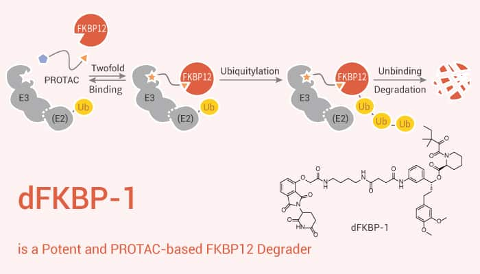 dFKBP 1 is a Potent and PROTAC based FKBP12 Degrader 2020 11 25 - dFKBP-1 is a Potent and PROTAC-based FKBP12 Degrader