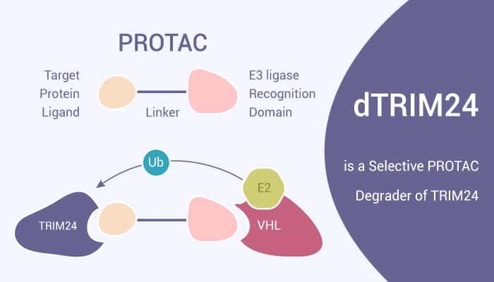 dTRIM24 is a Selective PROTAC Degrader of TRIM24 2020 11 14 - dTRIM24 is a Selective PROTAC Degrader of TRIM24
