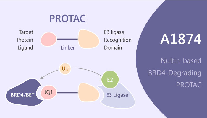 A1874 Nultin based BRD4 degrading PROTAC 2019 05 02 - A1874 is a Nultin-based BRD4-degrading PROTAC