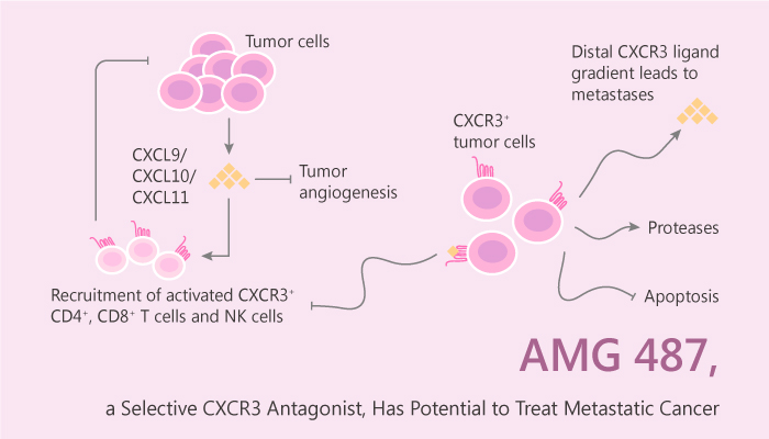 AMG 487 a Selective CXCR3 Antagonist Has Potential to Treat Metastatic Cancer 2019 06 28 - AMG 487, a Selective CXCR3 Antagonist, Has Potential to Treat Metastatic Cancer