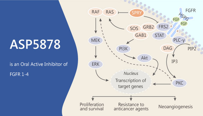 ASP5878 is an Oral Active Inhibitor of FGFR 1 2 3 and 4 With Anti tumor Activity 2019 06 17 - ASP5878 is an Oral Active Inhibitor of FGFR 1, 2, 3, and 4, With Anti-tumor Activity