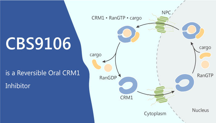 CBS9106 a Reversible Oral CRM1 Inhibitor Causes Arrest of the Cell Cycle and Induces Apoptosis 2019 06 14 - CBS9106, a Reversible Oral CRM1 Inhibitor, Causes Arrest of the Cell Cycle and Induces Apoptosis