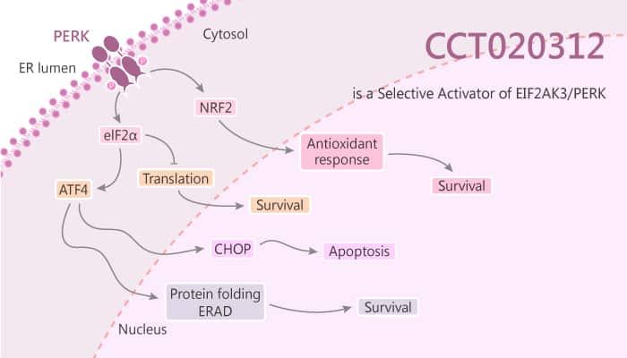 CCT020312 is a Selective Activator of EIF2AK3 PERK 2019 07 09 - CCT020312 is a Selective Activator of EIF2AK3/PERK