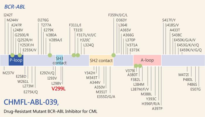 CHMFL ABL 039 Type II Native and Drug Resistant Mutant BCR ABL Inhibitor for Chronic Myeloid Leukemia 2019 05 14 - CHMFL-ABL-039, a Selective Type II Native and Drug-Resistant Mutant BCR-ABL Inhibitor  for Chronic Myeloid Leukemia