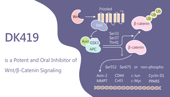 DK419 Is a Potent Inhibitor of Wnβ Catenin Signaling for Colorectal Cancer Treatment 2019 06 30 - DK419 Is a Potent Inhibitor of Wnt/β-Catenin Signaling for Colorectal Cancer Treatment