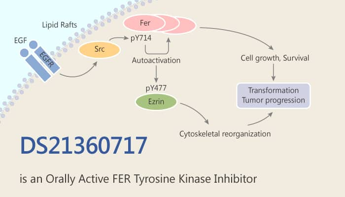 DS21360717 is an Orally Active FER Tyrosine Kinase Inhibitor 209 07 06 - DS21360717 is an Orally Active FER Tyrosine Kinase Inhibitor