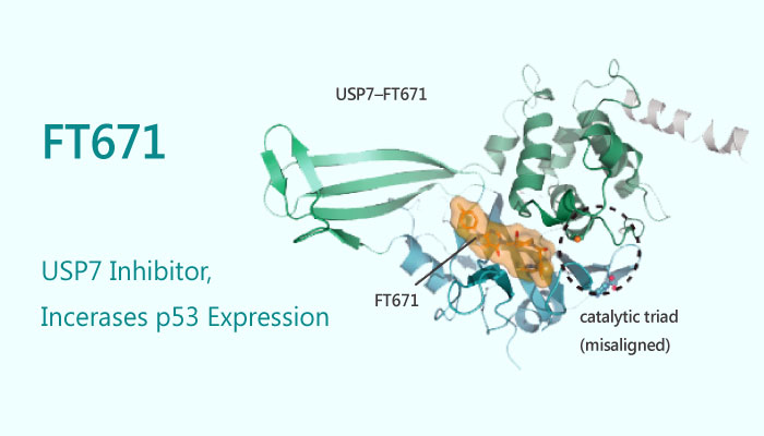 FT671 USP7 Inhibitor Increases p53 Expression 2019 05 06 - FT671, a USP7 Inhibitor, Increases p53 Expression
