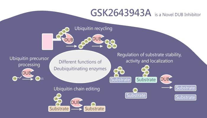 GSK2643943A is a Novel DUB Inhibitor 2019 07 25 - GSK2643943A is a Novel DUB Inhibitor