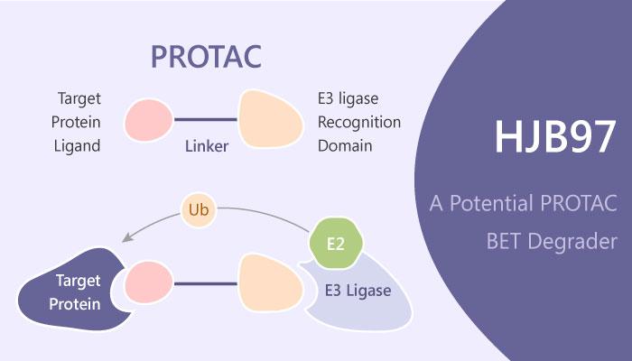 HJB97 PROTAC degrader BET myeloid leukemia 2019 04 01 - Optimization of HJB97 for The Design of PROTAC Degraders of BET Proteins