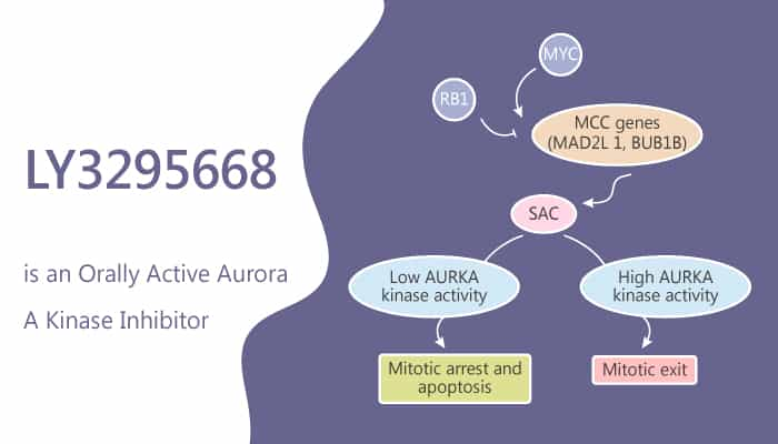 LY3295668 is an Orally Active Aurora A kinase Inhibitor 2019 07 06 - LY3295668 is an Orally Active Aurora-A kinase Inhibitor