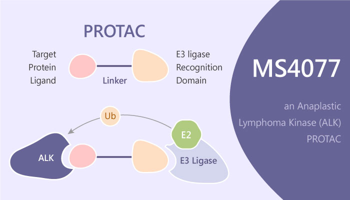 MS4077 an Anaplastic Lymphoma Kinase PROTAC Degrader 2019 05 19 - MS4077 is an Anaplastic Lymphoma Kinase PROTAC (Degrader)