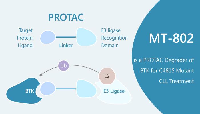 MT 802 is a PROTAC Degrader of BTK for C481S Mutant CLL Treatment 2019 07 30 - MT-802 is a PROTAC Degrader of BTK for C481S Mutant CLL Treatment