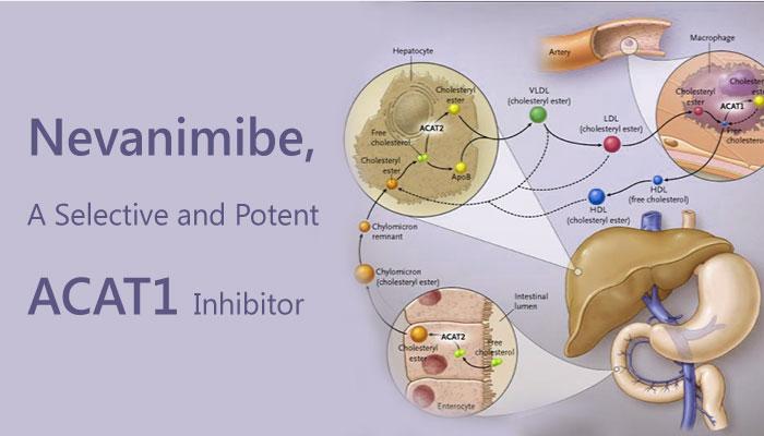 Nevanimibe ATR 101 acyl coenzyme A CoA cholesterol acyltransferases ACTA1 inhibitor Adrenocortical carcinoma 2019 04 10 - Nevanimibe (ATR-101) is a Potent ACAT1 Inhibitor