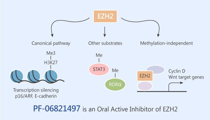 PF 06821497 an Oral Active Inhibitor of Enhancer of Zeste Homolog2 EZH2 2019 06 04 - PF-06821497 is an Oral Active Inhibitor of Enhancer of Zeste Homolog 2 (EZH2)