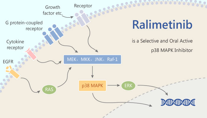 Ralimetinib is a Selective and Oral Active p38 MAPK Inhibitor with Antitumor Activity 2019 06 15 - Ralimetinib is a Selective and Oral Active p38 MAPK Inhibitor with Antitumor Activity