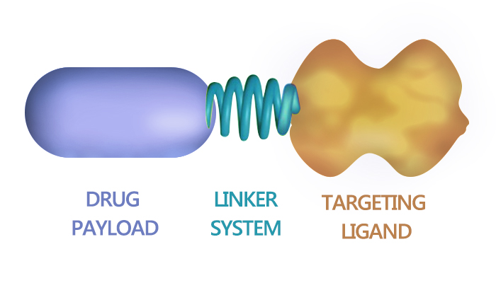 SMDC - EC0489, a SMDC for Cancer Therapy