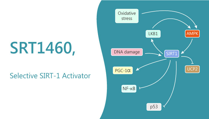 SRT1460 SRT1460 Sirtuin 1 Activator Negatively Regulate Pancreatic Cancer Cell Growth and Viability 2019 05 18 - SRT 1460, a Sirtuin-1 Activator, Negatively Regulate Pancreatic Cancer Cell Growth and Viability