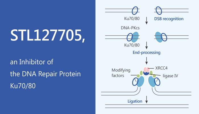 STL127705 Inhibitor of the DNA Repair Protein Ku7080 2019 05 17 - STL127705, an Inhibitor of the DNA Repair Protein Ku70/80