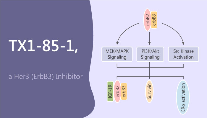TX1 85 1 TX1 85 1 ATP competitive ligand of Her3 covalent modification of Her3 to inhibit H er3 signaling  - TX1-85-1, a ATP-competitive ligand of Her3, covalent modification of Her3 to inhibit Her3 signaling