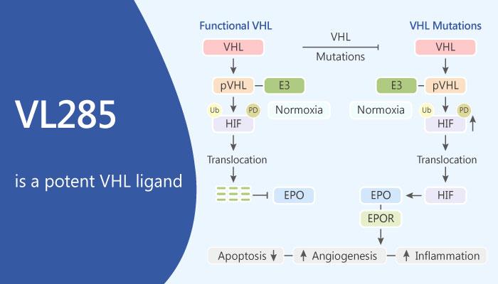 VL285 is a Potent VHL Ligand 2019 05 24 - VL285, is a Potent VHL Ligand